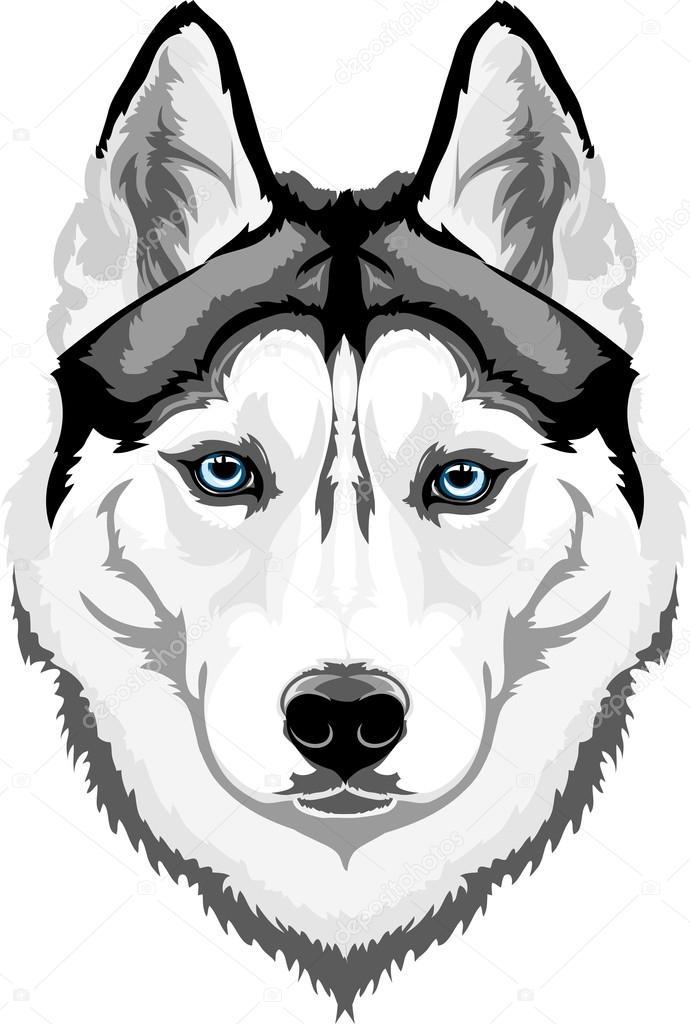 Áˆ Husky Stock Pictures Royalty Free Cartoon Huskies Images Download On Depositphotos