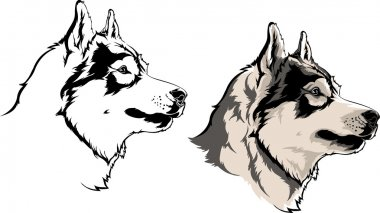 the head of the dog, wolf