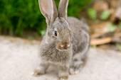 Photo Rabbit is Beautiful Animal of Nature