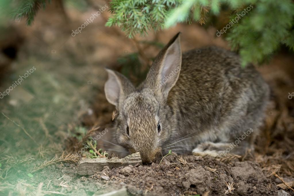 Rabbit is Beautiful Animal of Nature