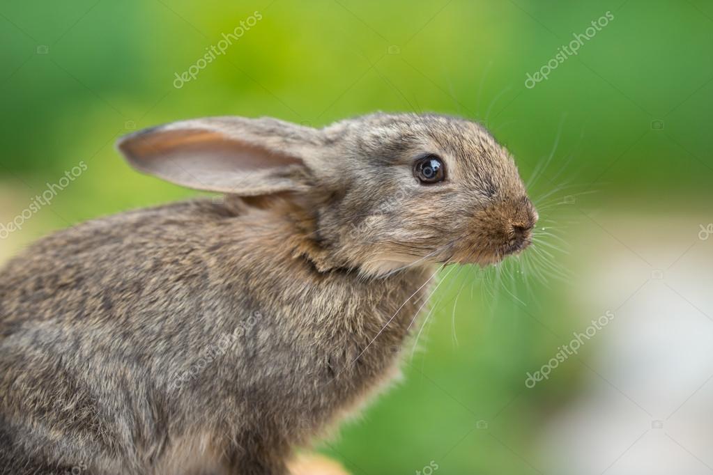 Rabbit. Beautiful animal of wild nature
