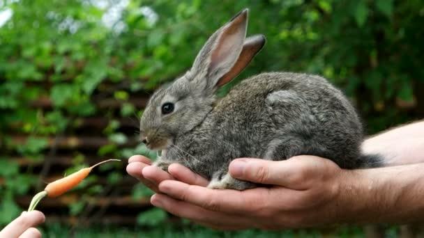 Kaninchen. Fütterung von Tieren