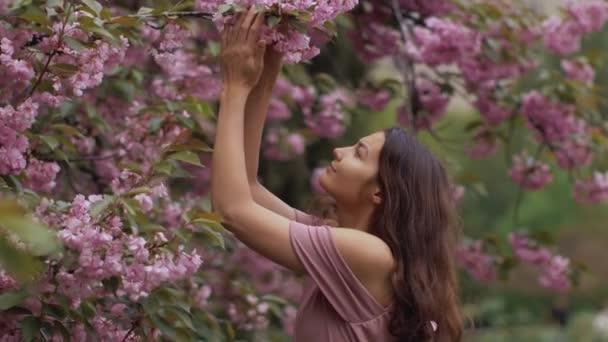 Nő a virágzó Sakura fa a természetben