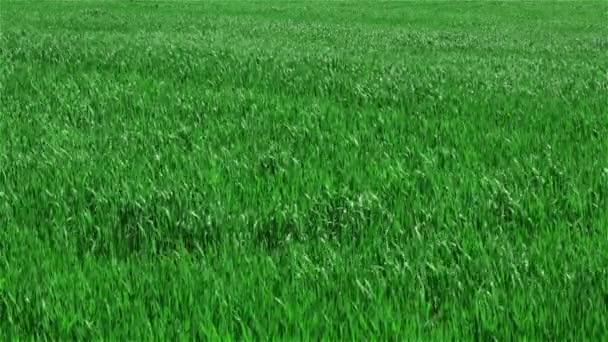 zelené trávy na hřišti