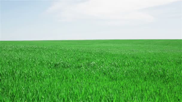 Zelená pole