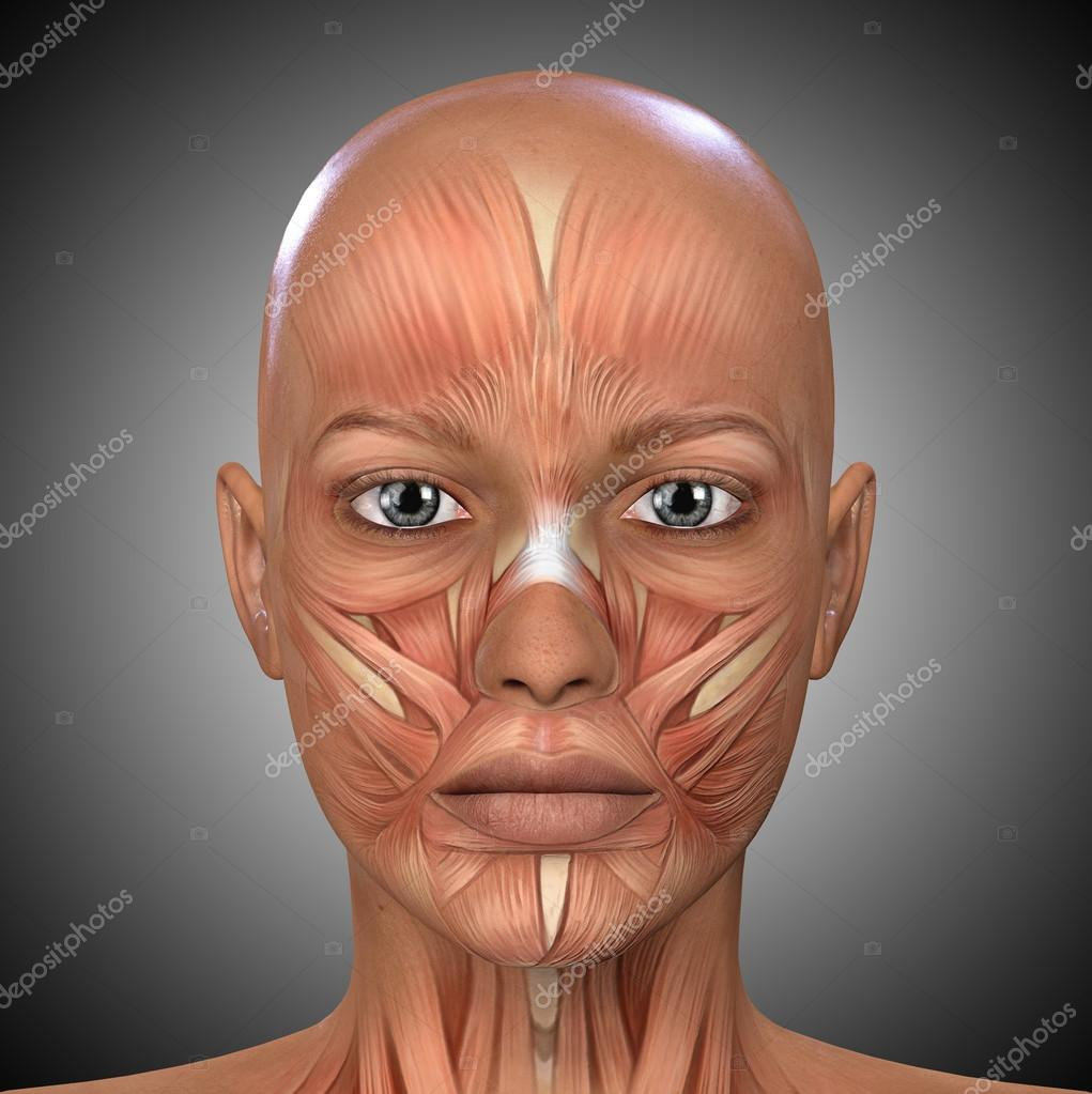 Female Face Muscles Anatomy — Stock Photo © illustrart #104452970