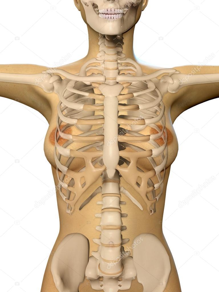 3D Render einer Frau Körper und Skelett Ergebnis des Tors hautnah ...