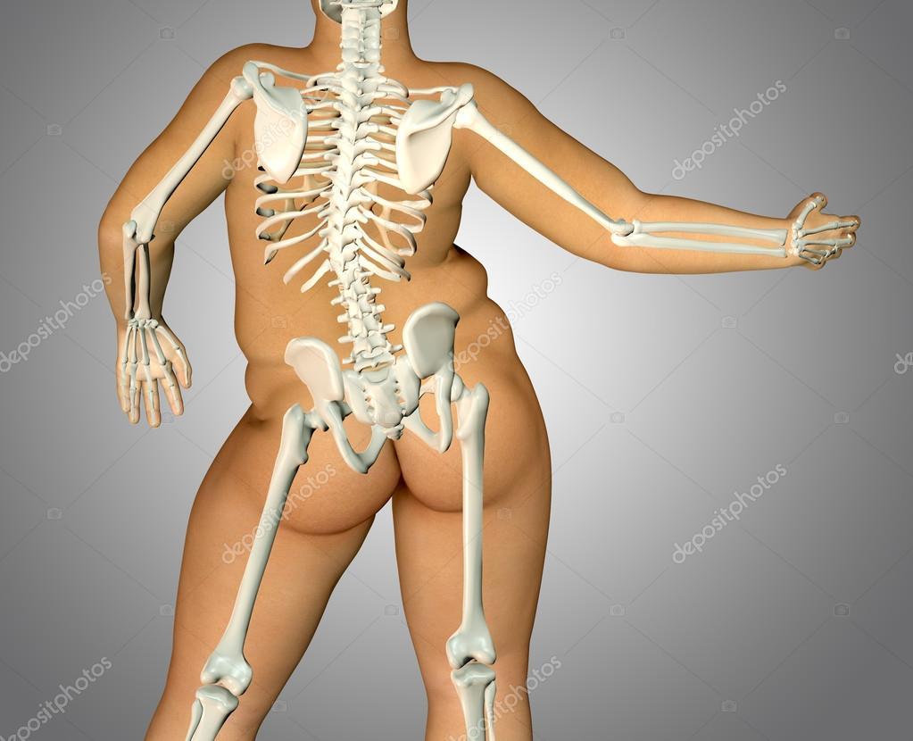 3D Fett zurück Körper Anatomie mit Skelett — Stockfoto © illustrart ...