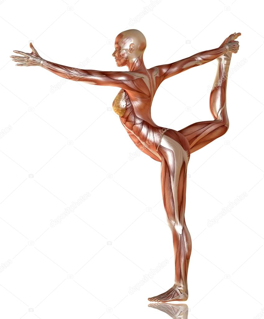 3d Render Of Woman Body With Muscle Anatomy Doing Yoga Stock Photo