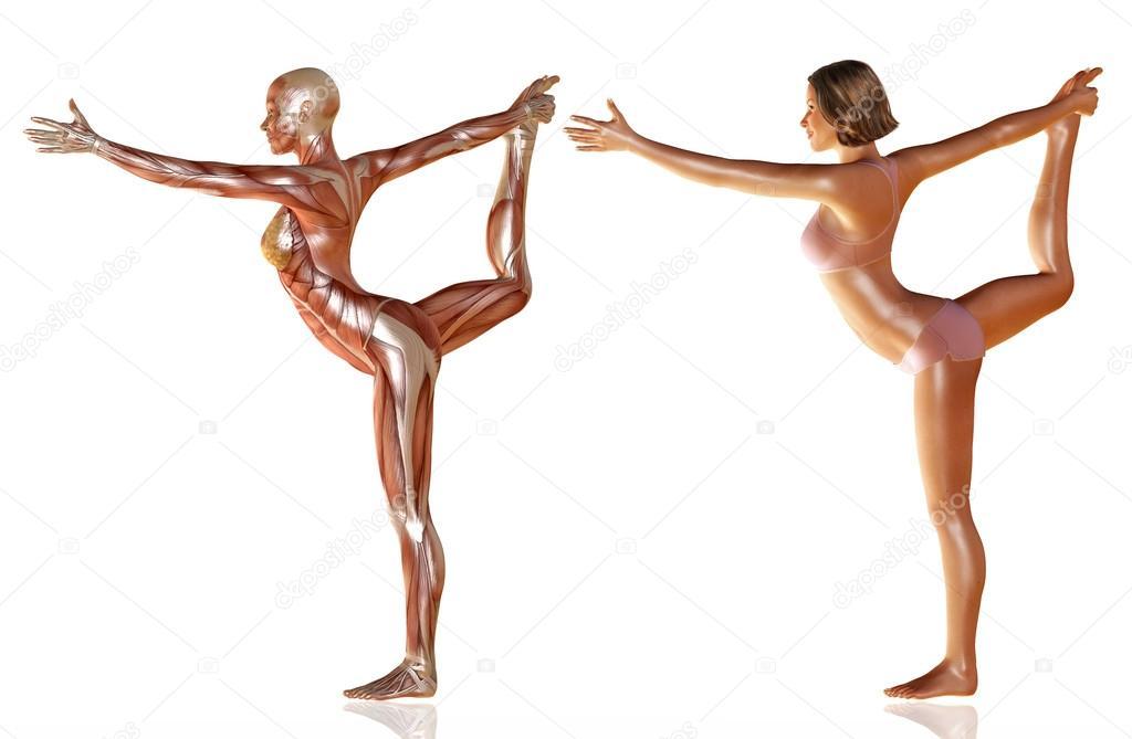 3D Rendering der Körper der Frau mit Muskeln Anatomie Yoga machen ...