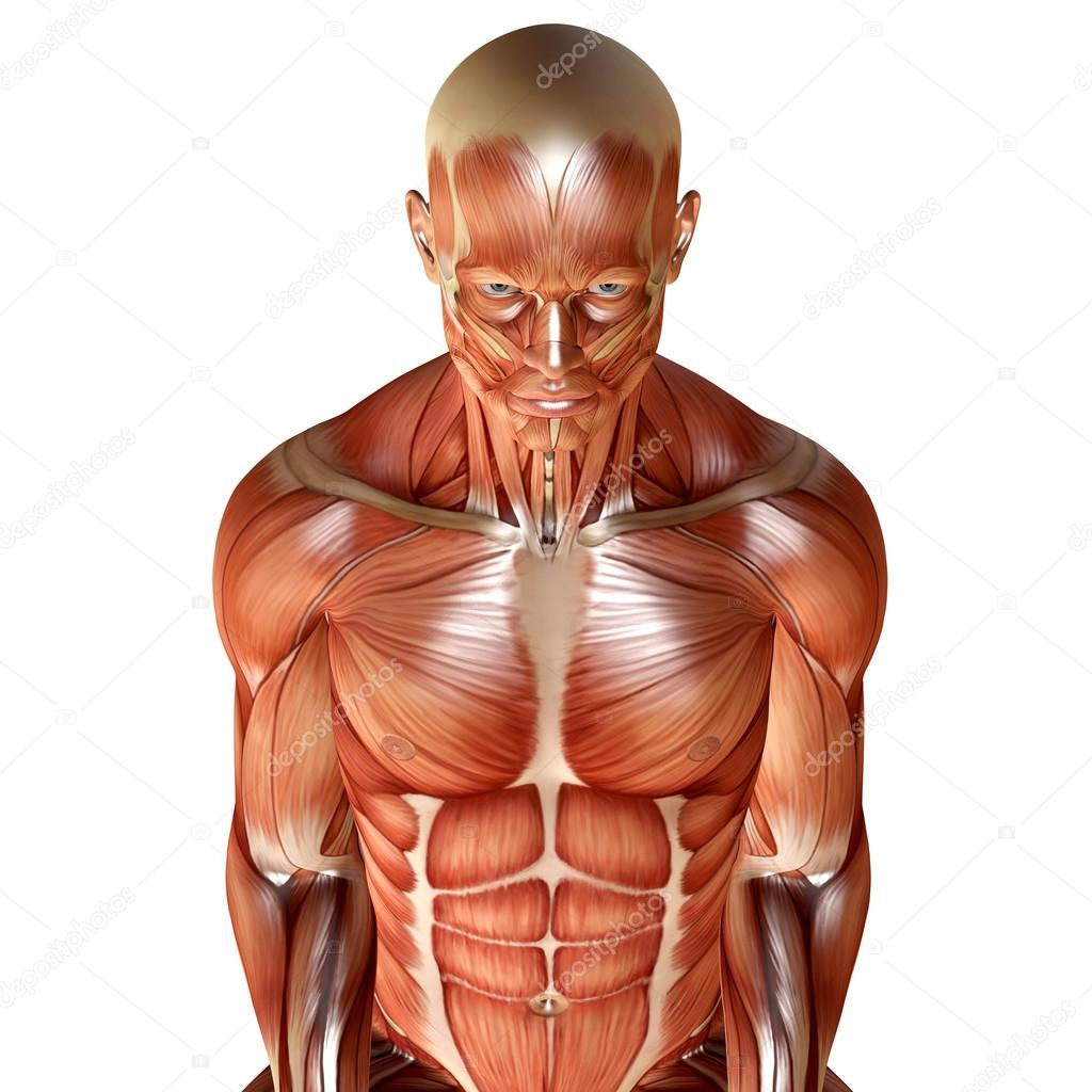 render 3D de una anatomía muscular masculina — Fotos de Stock ...