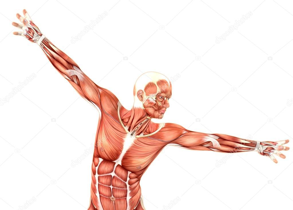 3D Rendering einer medizinischen männlichen Figur zeigt Schulter ...