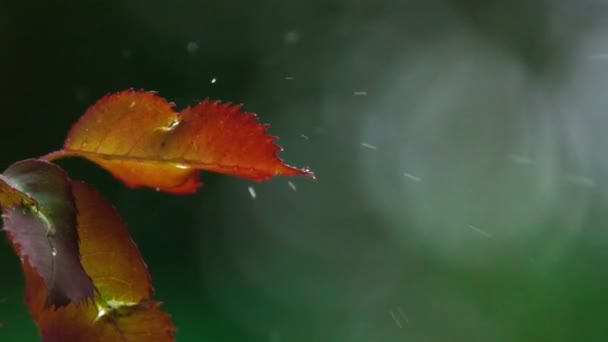 Summer Rain In Slow Motion