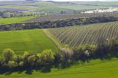 Jarní vinice u Lampelberka, Znojmsko, jižní Morava, Česká republika
