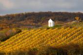 Podzimní vinice u Hnanic, Znojmsko, Jižní Čechy, Česká republika