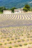 Fotografie lavender field, Provence, France