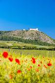 zřícenina hradu Devický s vinicemi, Česká republika