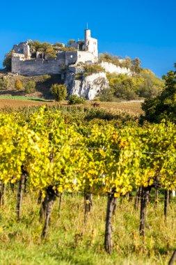 ruins of Falkenstein Castle with vineyard in autumn, Lower Austr