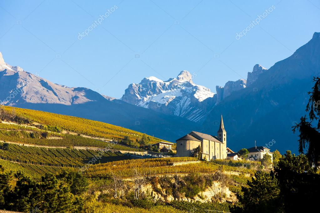 vineyards below church at Conthey, Sion region, canton Valais, S