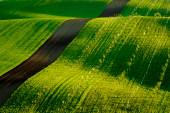 Photo Green wavy hills in South Moravia
