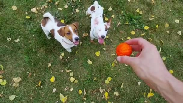 Cute purebred dogs playing with ball in park