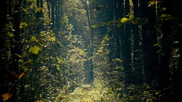Herbst im Wald.