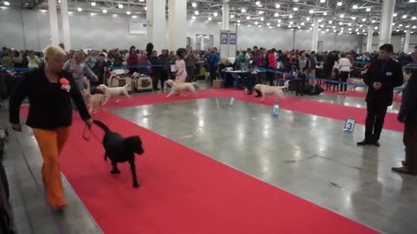 International Dog Show CACIB-FCI