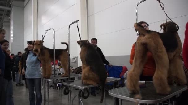 Mezinárodní výstava psů Cacib-Fci