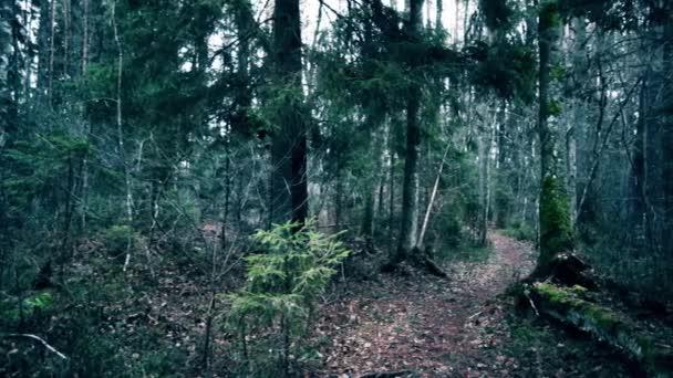 Pěšina v borovém lese