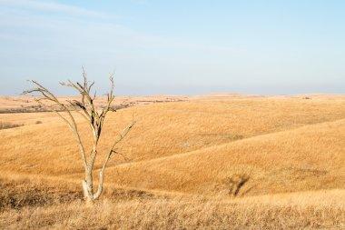 Lone Tree in Flint Hills of Kansas