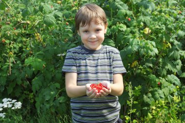 little boy offering red currants