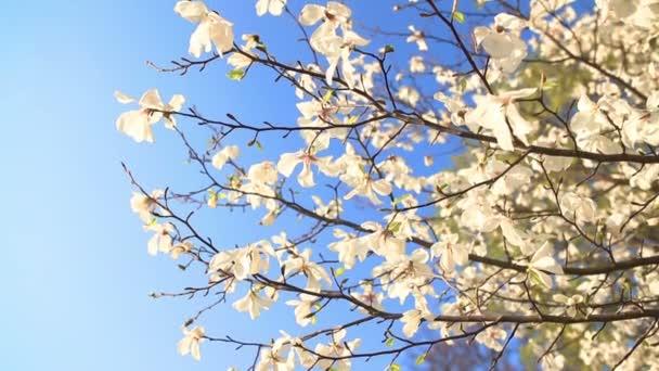 Beautiful apple tree branch