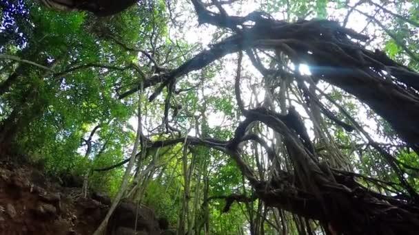 Tropický strom v Indii