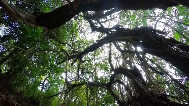 Trópusi fa Indiában