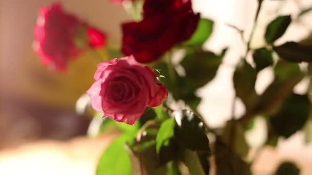 Rózsa csokor dolly lövés