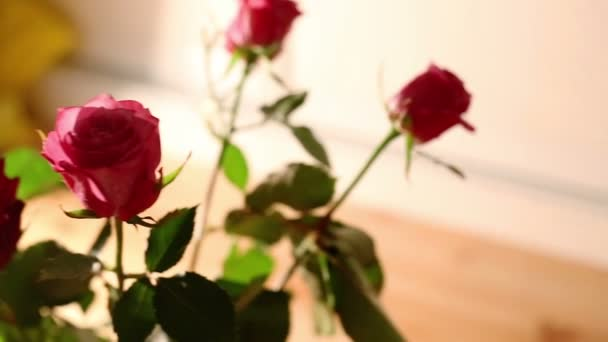 Růže kytice dolly zastřelil