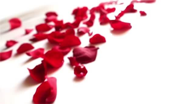 červené okvětní lístky růží na bílém pozadí