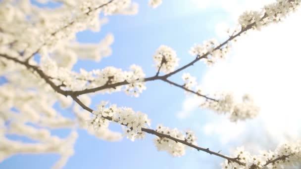 krásný apple větev stromu