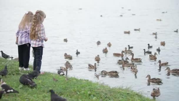 malá děvčata v parku krmí kachny