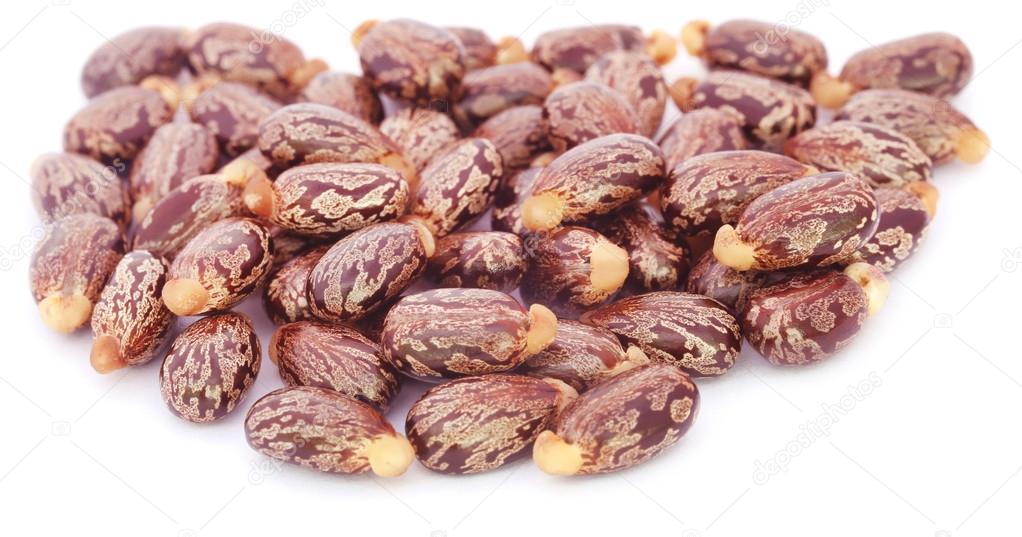 Close up of Castor beans