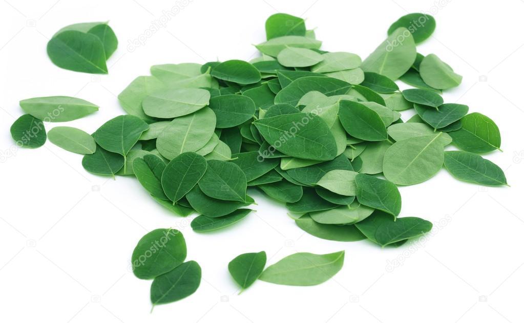 Close up of Moringa leaves