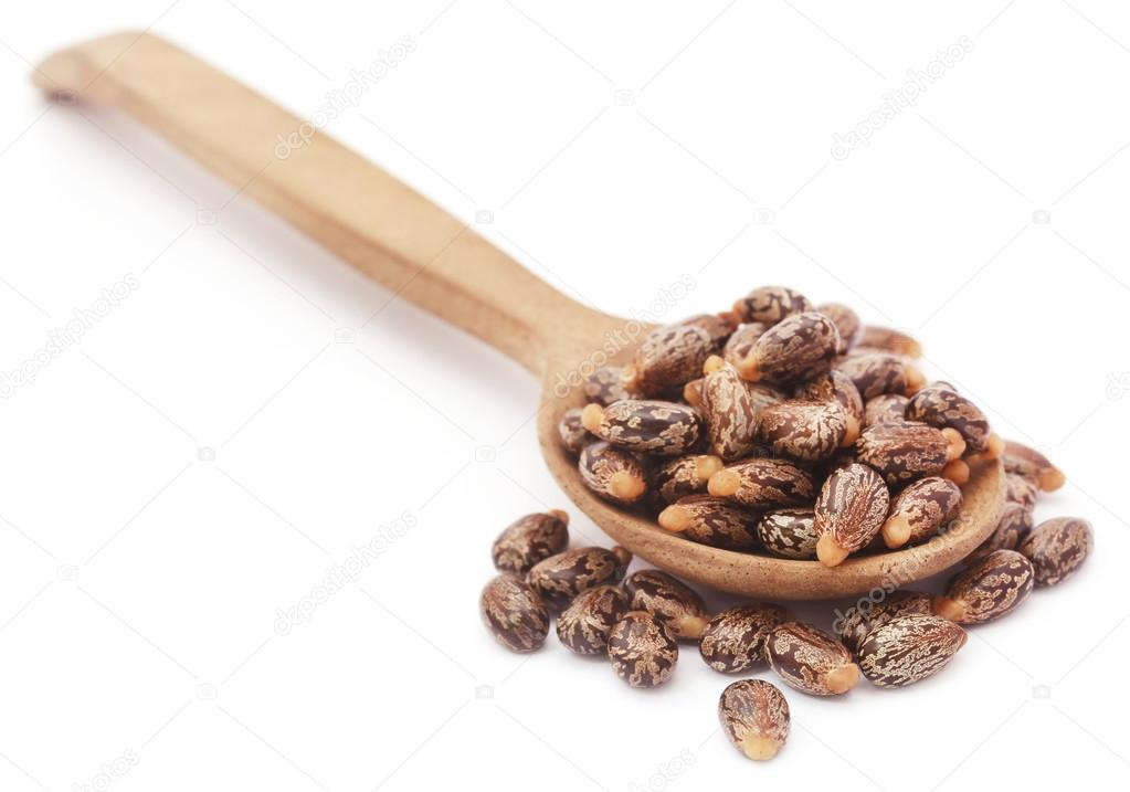 Castor beans in a wooden spoon