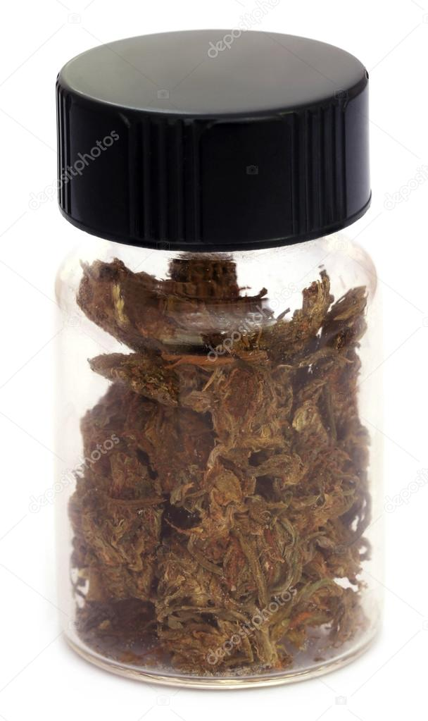 Close up of Medicinal cannabis