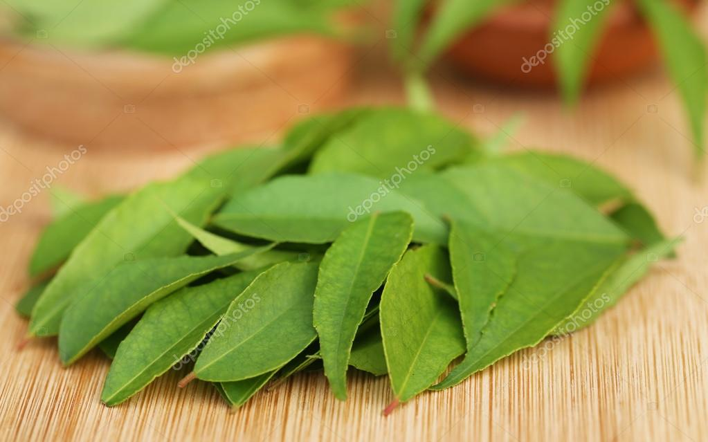 Close up of Curry leaves