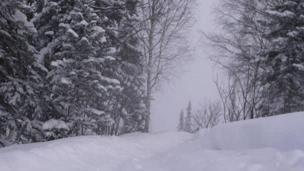 Zimní sníh v lese, krásné zasněžené vánoční ráno s padajícím sněhem. Vánoční pozadí. Sněhem pokryté stromy. Zimní krajina. Zasněžené stromy.