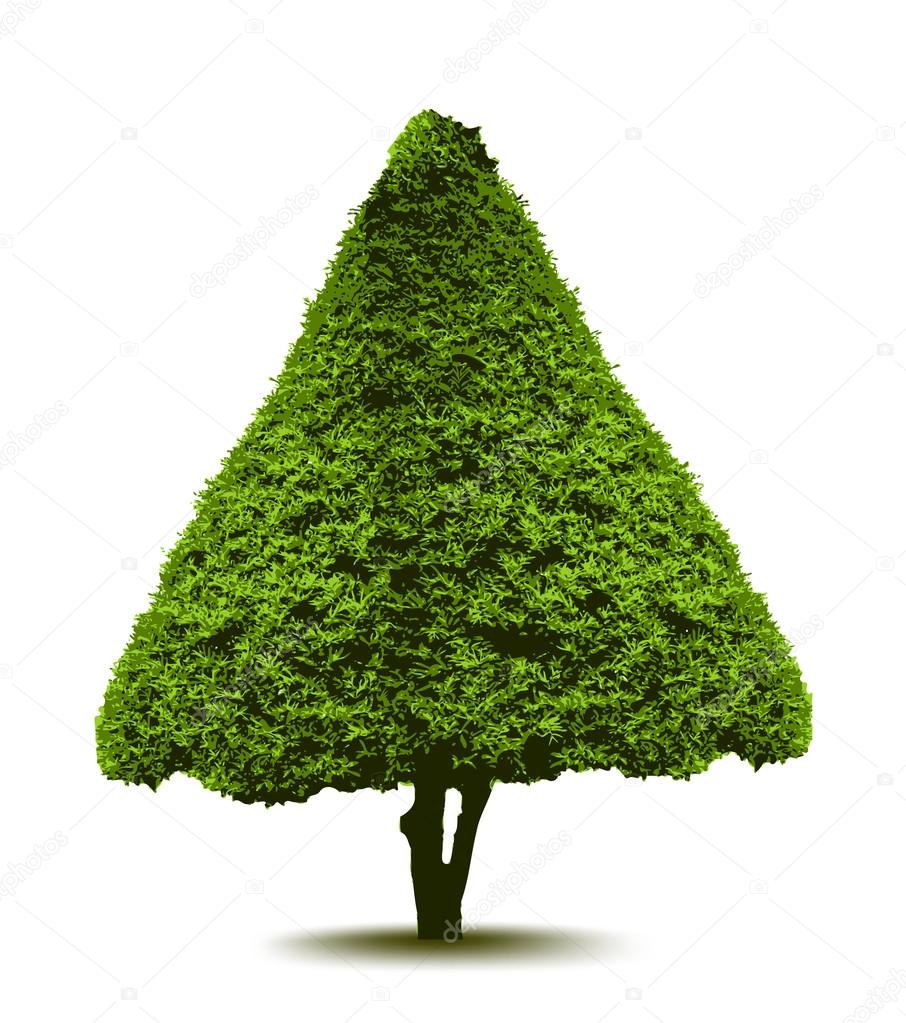 Topiary Landscape plant in the form of a Christmas tree. Vector