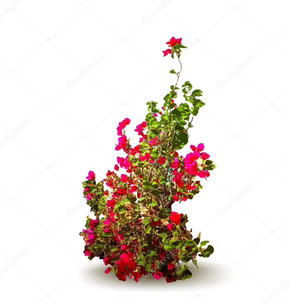 Plant with flowers and leaves. Decorative tree. Vector