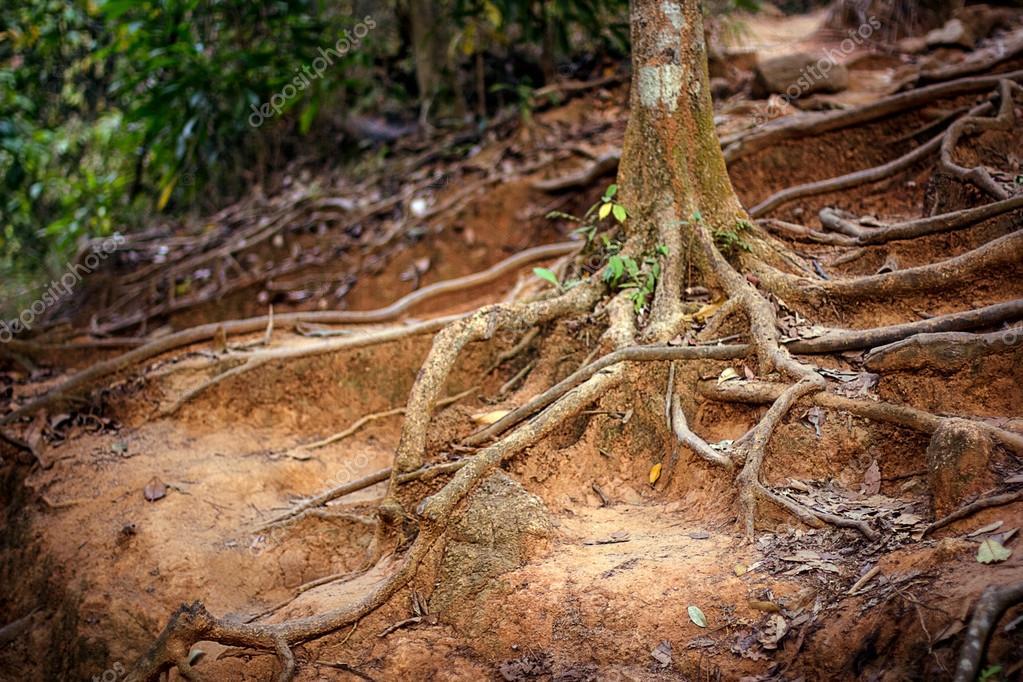 Фотообои корни деревьев в туманном лесу