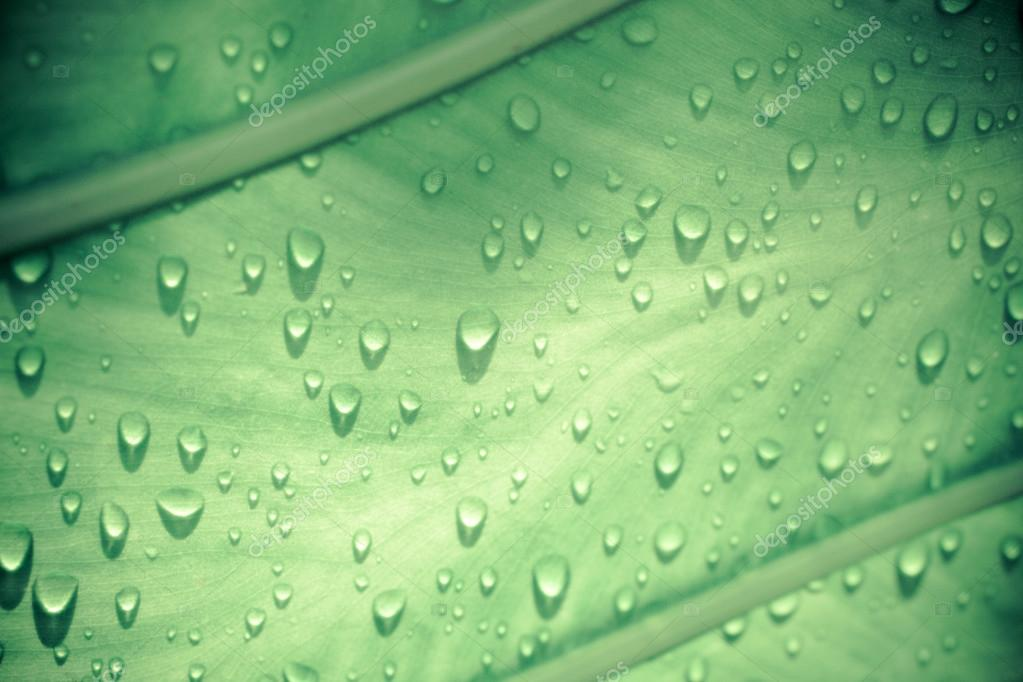 Water drops on green leaf in retro colors. Macro shoot