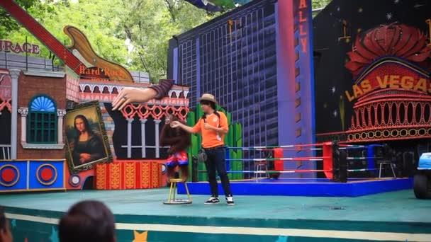Thaiföld, Bangkok, 2014. augusztus 5., öltözött gorilla, a színpadon a boksz. Vidám show a Safari Park. HD. 1920 x 1080